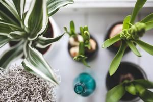 piante zen